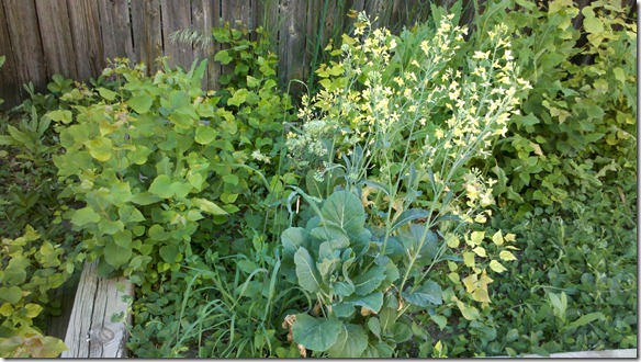 beginning of garden
